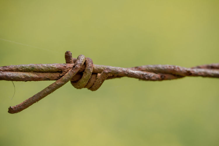 Rusty barbed