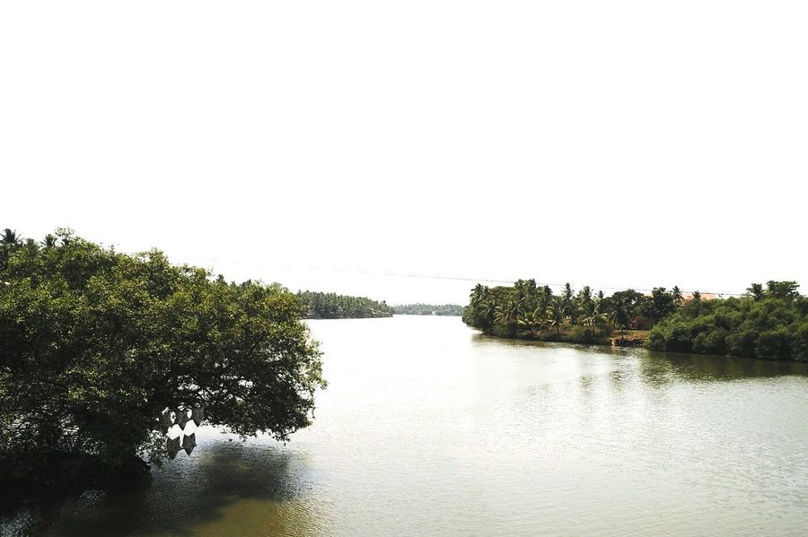 Sal River, Goa, India. Sal River River Sal Goa Goa India Riverside Coconut Trees Scenery View Chinchim Assolna Betül Road Bridge Scene Riverbank Waterbody River Views Bridge Over Water Trees And River