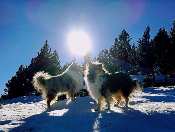 Snow Sports Animal Tree No People Sky Clear Sky Outdoors Nature Day Sun Domestic Animals Togetherness Animal Themes Dog Animals In The Wild
