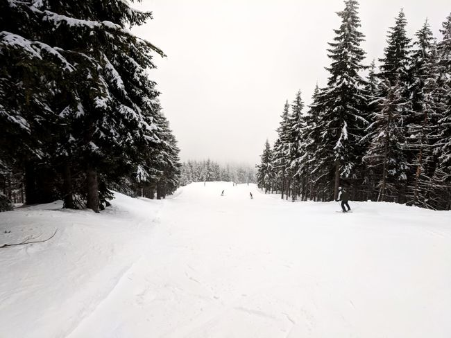 Checking out the largest ski resort complex in Czechia Downhill Skiing Slope Winter Trees Sky Fog