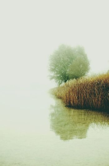 Waterfront Water Tranquility Reflection Tranquil Scene Scenics Beauty In Nature Non-urban Scene Nature Calm Growth Day Sky Foggy Sea No People Seascape Majestic Remote Fog Eye4photography  EyeEmBestPics EyeEm Best Shots Eye4photography  Munich, Germany