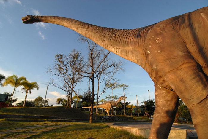 Dinosaurs Dinosours Dino's Photography Dinosoarus Outdoors Park Phuwiang Sky
