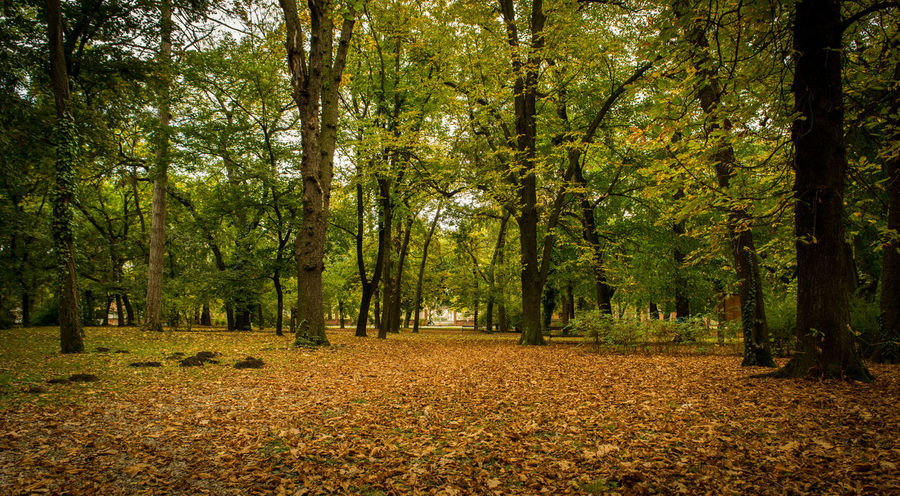 Autumn Beauty In Nature Békéscsaba Békésmegye Change Fallen Fallen Leaf Hungary Leaf Nature Nikon Nikond3300 Nikonphotography Outdoors Season  Tranquil Scene Tranquility Tree