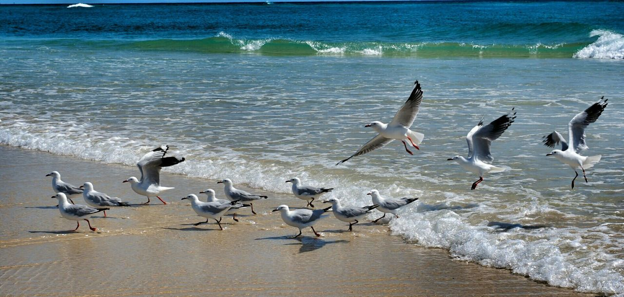 Seagulls At Sea Shore