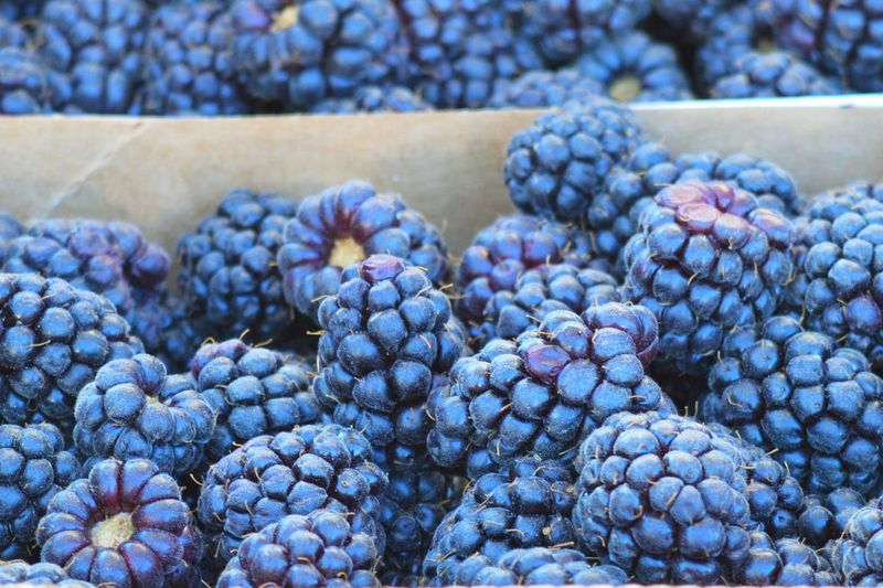 Close-up of blackberries for sale at market stall