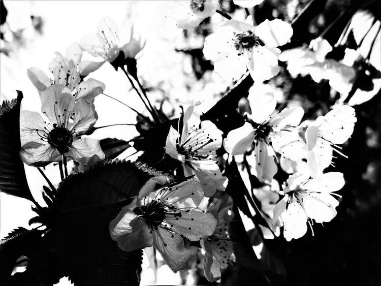 Sonydsc EyeEm Followme Flower Backgrounds Flower Tree