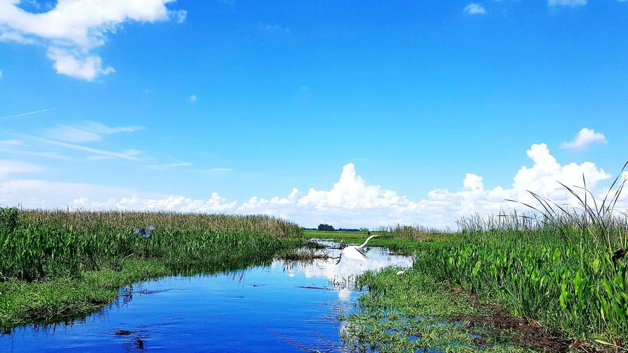Nature Outdoors Beauty In Nature No People Cloud - Sky Sky Day Landscape Summer Scenics Plant Water Grass Freshness Beauty In Nature Nature Airboat Ride Airboat Rides On The Swamps Swamp Swamp Life Airboat Oceola Motion Plant