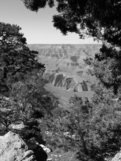 Tree Tranquil Scene Nature Scenics Beauty In Nature No People Outdoors Grand Canyon Canyon Arizona South Rim Black And White Monochrome Monochrome Photography Huaweiphotography Leica
