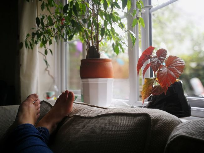 Sunny Sundays. Human Hand Low Section Living Room Curtain Domestic Life Home Interior Human Leg Personal Perspective Human Foot Feet Up Legs Crossed At Ankle Cozy barefoot Window Sill Pillow Sole Of Foot Comfortable #urbanana: The Urban Playground
