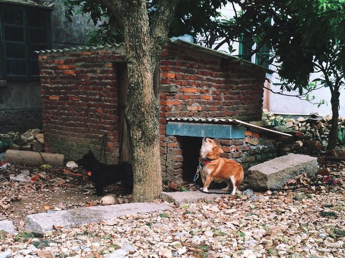 Animal Themes Bark Barking Brick Wall Building Exterior Built Structure Dogs Domestic Animals Howl Mammal No People Outdoors Pets Tree