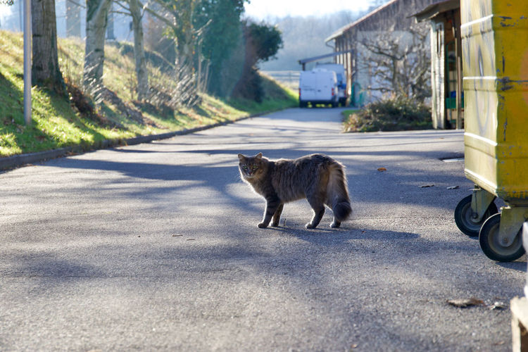 View of a cat on road