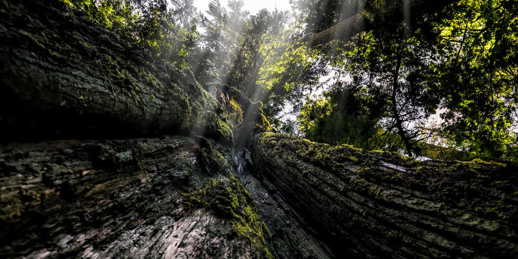 Low angle view of mossy tree in forest