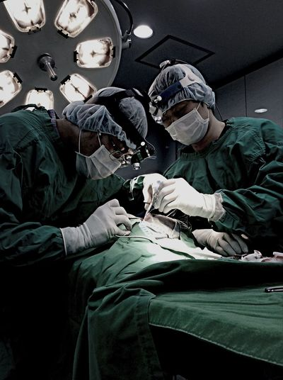 Veterinarian Animal Hospital South Korea 다울 동물병원 AMC