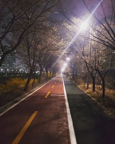 a road to run Night Running Runner Red Road Light And Shadow EyeEm Tree Illuminated