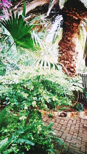 Tropical Queensland Our Beautiful Back Yard Grateful For Such A Space Lush Foliage