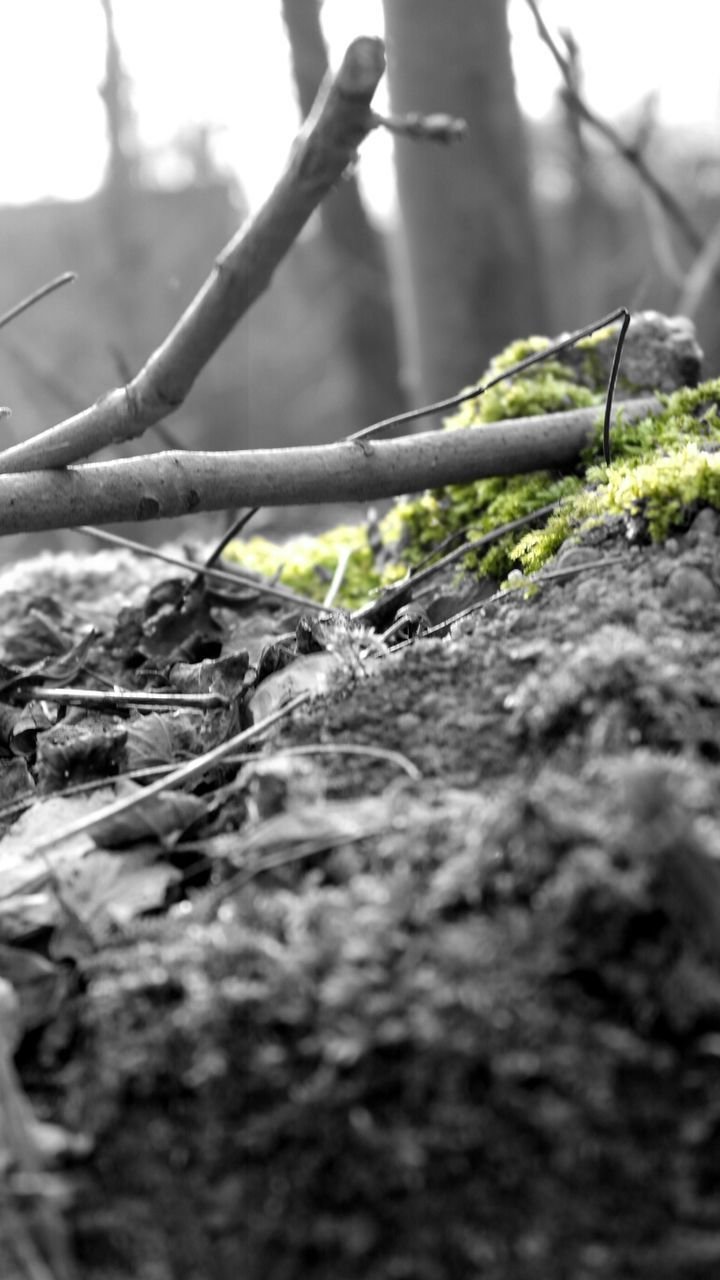 Twigs In Forest