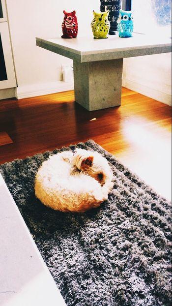 Nawww love cleo so much xxx Dogslife Sleeping Beauty Cute Doggy Bestdogever Cute Animals Sleeping Dog