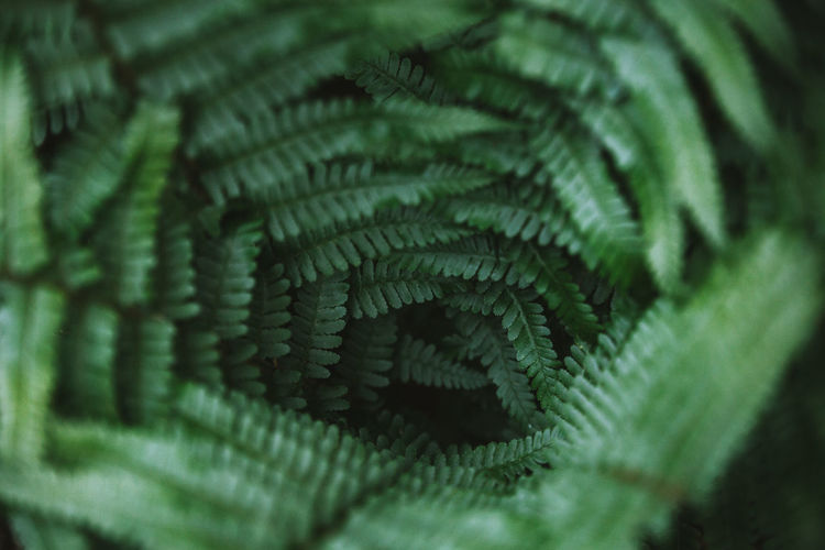 Green Color Nature Backgrounds Beauty In Nature Close-up Day Detail Fern Full Frame Green Color Growth Leaf Leaves Natural Pattern Nature Nature_collection Night No People Outdoors Pattern Plant Plant Part Selective Focus Textured  Tree The Week On EyeEm Editor's Picks The Great Outdoors - 2018 EyeEm Awards The Still Life Photographer - 2018 EyeEm Awards The Creative - 2018 EyeEm Awards