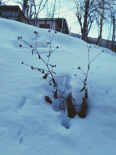 Snow Nature Check This Out Travelling Photography No People Tree Beauty In Nature Close-up Taking Photos Hello World Beauty In Nature Winterdairies Winterdiaries Snow ❄ Wayoflife Enjoying Travelling Nature