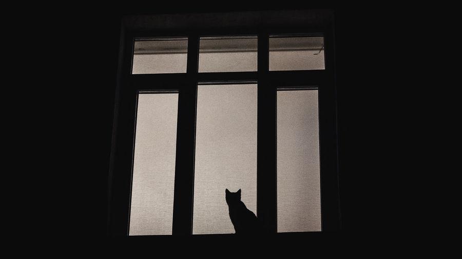 Silhouette of bird on window
