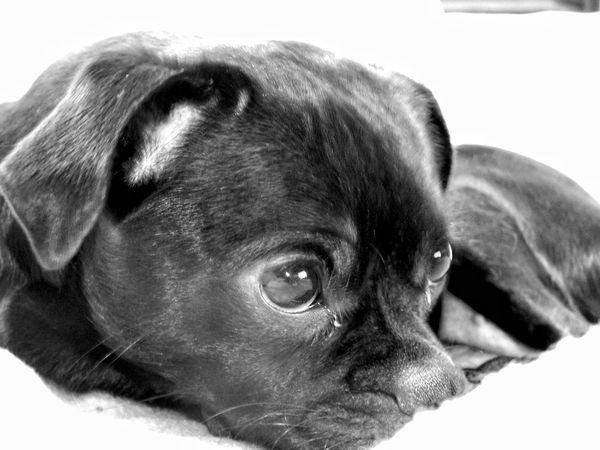 Animal eye!! Animal ❤ ❤ ❤ Itsabeautifulday Eye Love Dog Beautiful Animals  Musinodolce B/w Series
