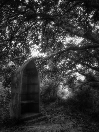 Tree Built Structure Architecture Low Angle View No People Nature Tranquility Outdoors Tranquility Tree Seat Gothic Style Hello Darkness My Old Friend Wales❤ Newtown Powys