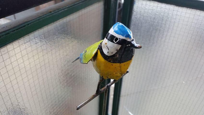 EyeEm Selects Birdie One Animal Animal Wildlife Animal Themes High Angle View No People Bird Close-up