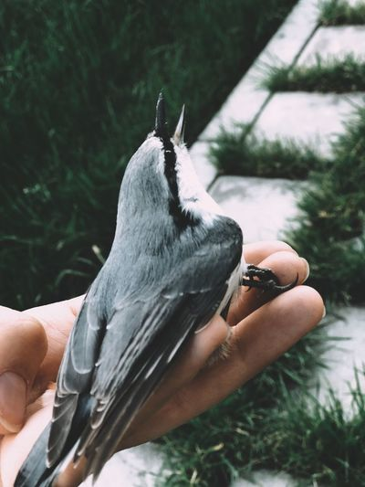 Midsection of person holding bird