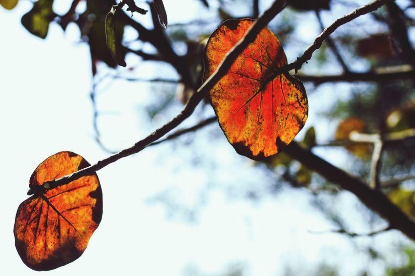 Leaf Nature Sky Hojas Secas Hojas Y Ramas Hojas Hojas De Color Lima Lima-Perú Branches And Leaves