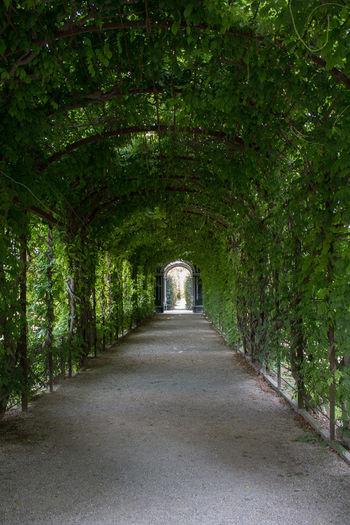 Nature Garden Flowers,Plants & Garden Vienna