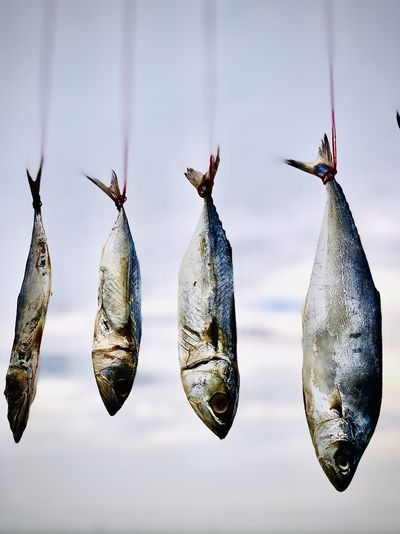 Low angle view of fish hanging against clear sky