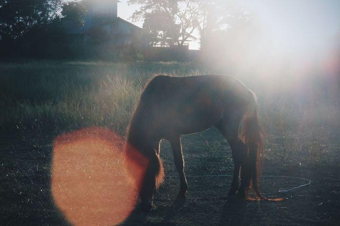 Horse Grass Darktones Trees EyeEm Best Shots Eyeem Market EyeEm Flare Flarelight Animal Wildlife One Animal Nature Grass