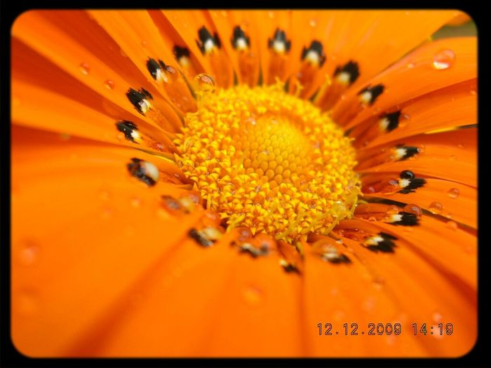Natural Xtreme Orange Flowers Summer Flowers Spring Flowers