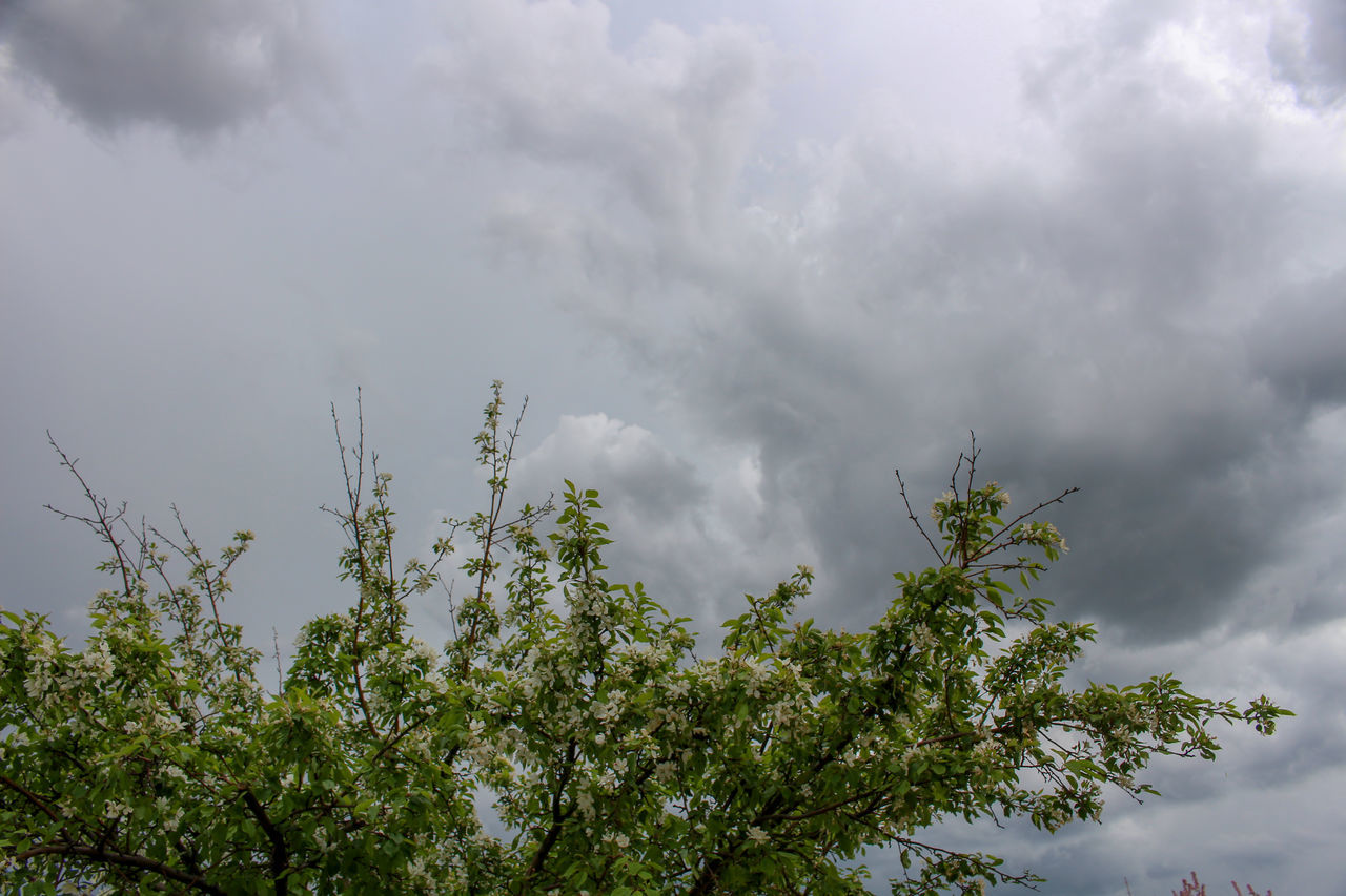 cloud - sky, plant, tree, sky, beauty in nature, growth, low angle view, nature, no people, day, green color, storm, outdoors, tranquility, overcast, branch, scenics - nature, storm cloud, leaf