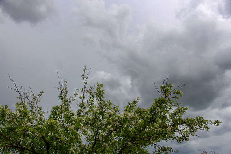 Spring thunderstorm in Gillette, Wyoming Storm Clouds Gathering Wyoming Beauty In Nature Branch Cloud - Sky Day Green Color Growth Low Angle View Nature No People Outdoors Overcast Plant Scenics - Nature Sky Storm Storm Cloud Storm Clouds Storm Clouds At Sunset Thunderstorm Tranquility Tree Treetop