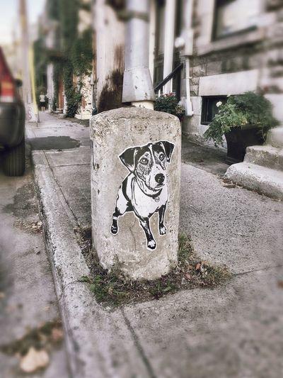 Montréal Art Streetphotography Street Photography Streetart Street Art Street Art/Graffiti Graffiti Graffiti Art Dog Plateau-Mont-Royal Smartphonephotography Camkix