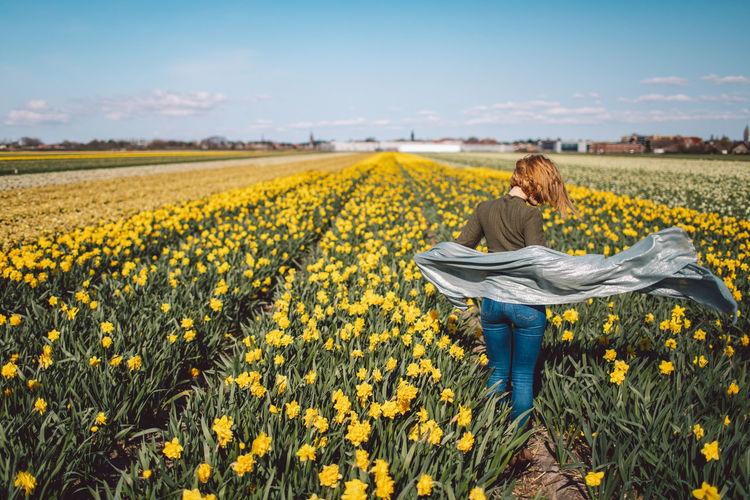 Full length of sunflower in field