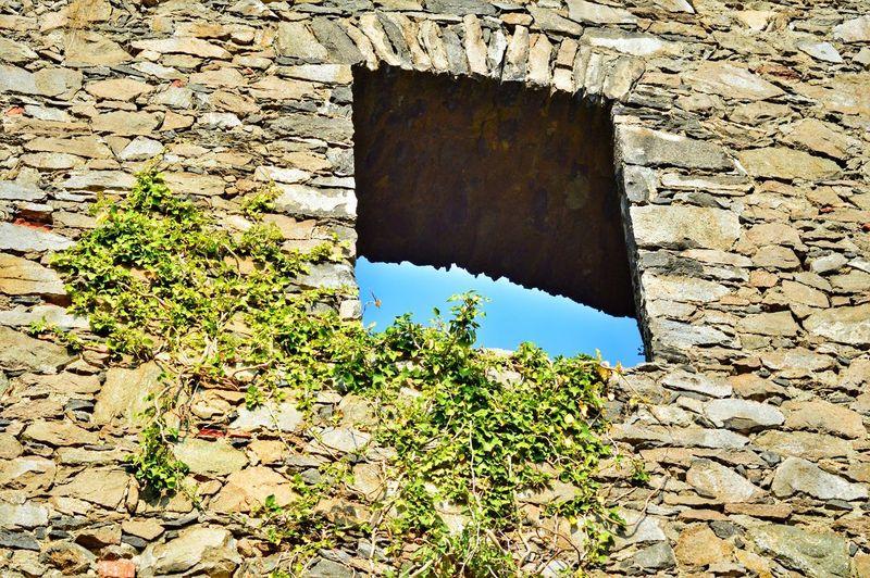 window Efeu