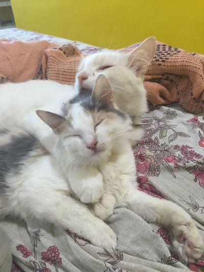 Muito amor envolvido! Euamogatos PaixãoPorGatos ILoveCat Lindos Keiko Valentim Amor