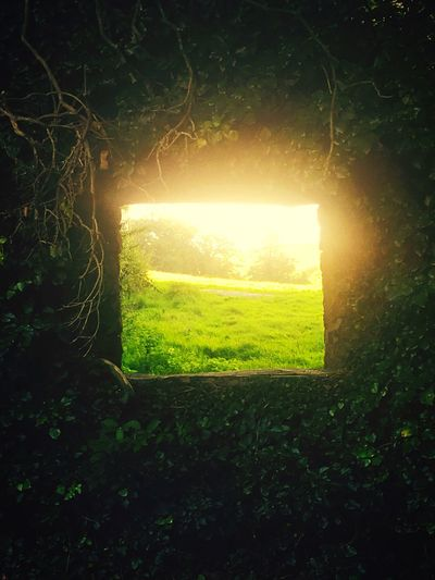 NaturesWindow 🖼 Window Outdoors Nature Plant Tranquility Grassy Green Color Day Sun Bright Beauty In Nature No People Scenics Tranquil Scene The Magic Mission Live For The Story
