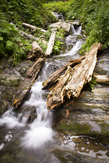 Nature Nature Photography Rosa Khutor Russia Forest Forest Photography Forest River Nature_collection