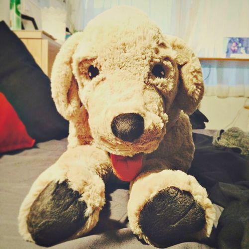 IKEA Dog Vronsky Mon Chien