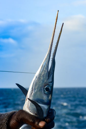 Close-up of hand holding swordfish by sea