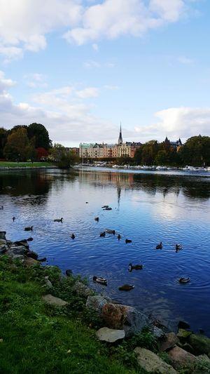 Hello Ducks