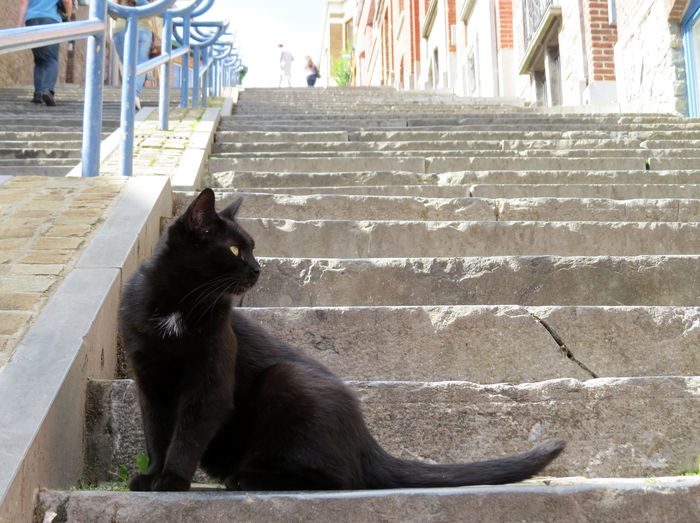 Alley Cat Black Cat Cats Of EyeEm Liège Stairs Steps Animal Themes Architecture Cat Cats Domestic Animals Domestic Cat Feline Kedi Mammal Montagne De Bueren One Animal Pets Sitting Staircase Steps Steps And Staircases Stray Stray Cat Street Cat
