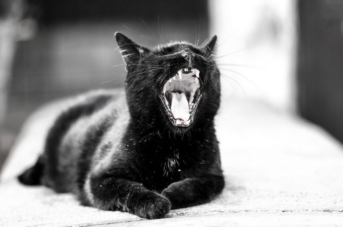 One Animal Pets Domestic Cat Domestic Animals Animal Themes Yawning Animal Feline Mammal Protruding No People Ear Outdoors Day Close-up Check This Out The Week On EyeEm Bokehlicious Bokeh Photography Animal Antics  Candid