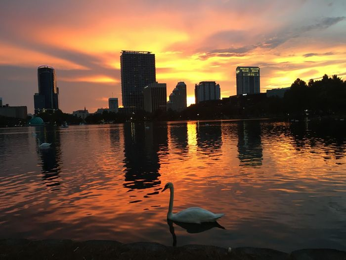 Beautiful sunset at Lake Eola in Downtown Orlando. Sunset_collection Swans Lake Eola Park