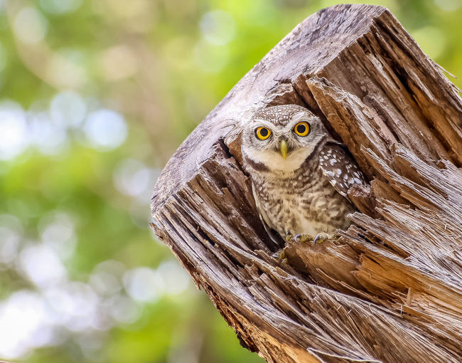Owls live in
