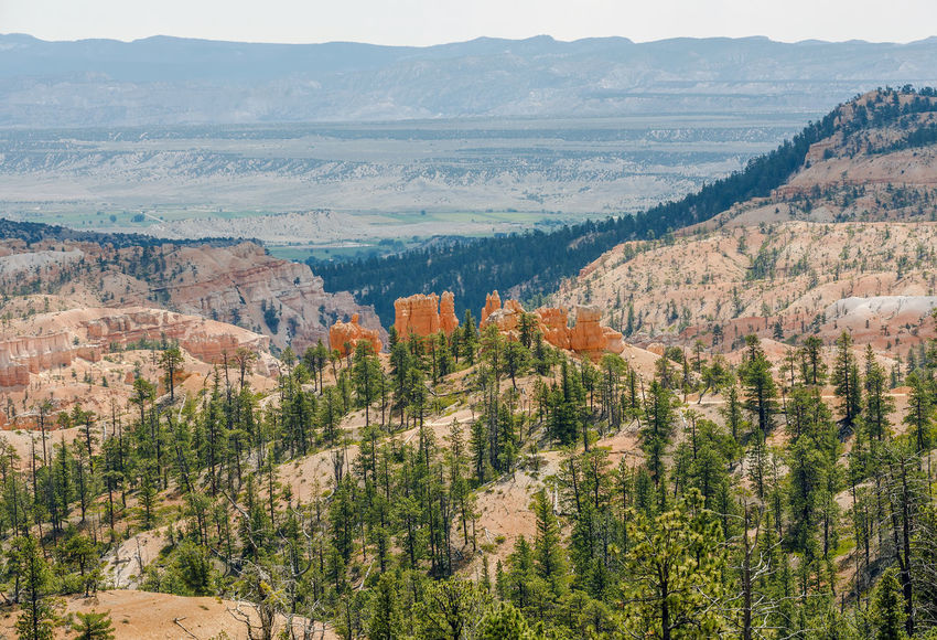 Green forest and crimson-coloured hoodoos in Bryce Canyon, Utah Bryce Canyon National Park Nature Panorama Beauty In Nature Bryce Canyon National Park Day Destination Forest High Angle View Hoodoos Landscape Lanscape Magazinecover Mountain Nature No People Orange Color Outdoors Photography Scenics Tranquil Scene Tranquility Travel Destinations Tree