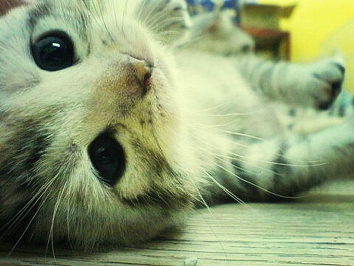Cats Cute Love Pretty